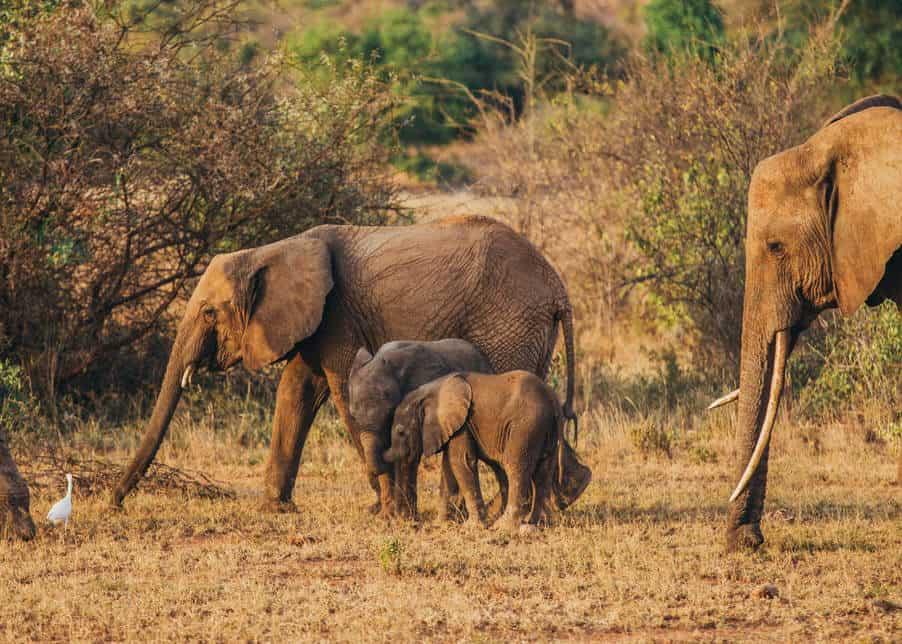 Wildlife and Heritage Tour in Nairobi city