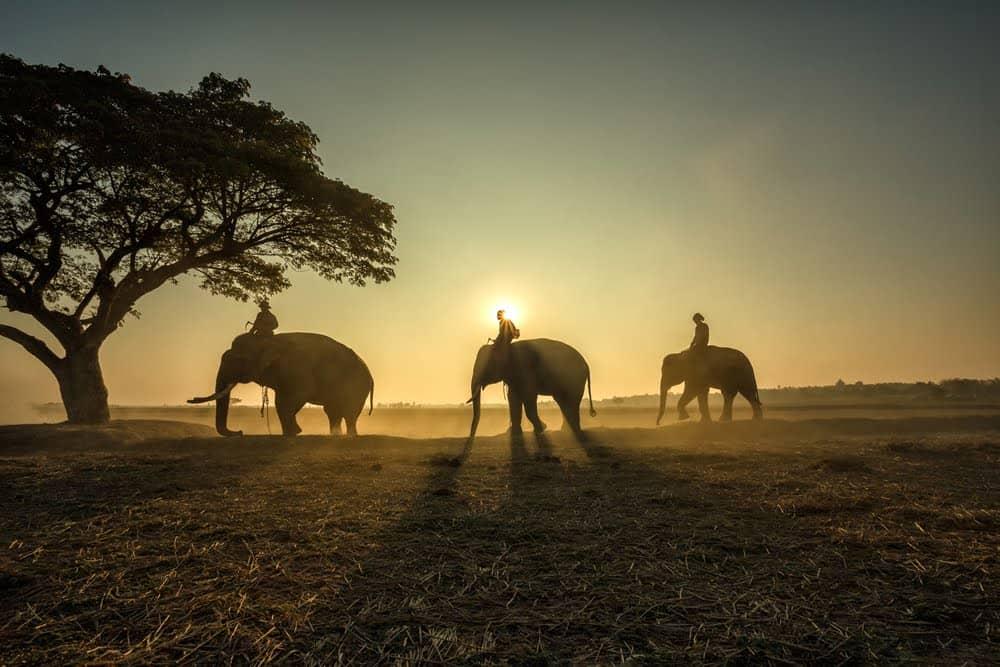 Serengeti Day Safari from Mwanza