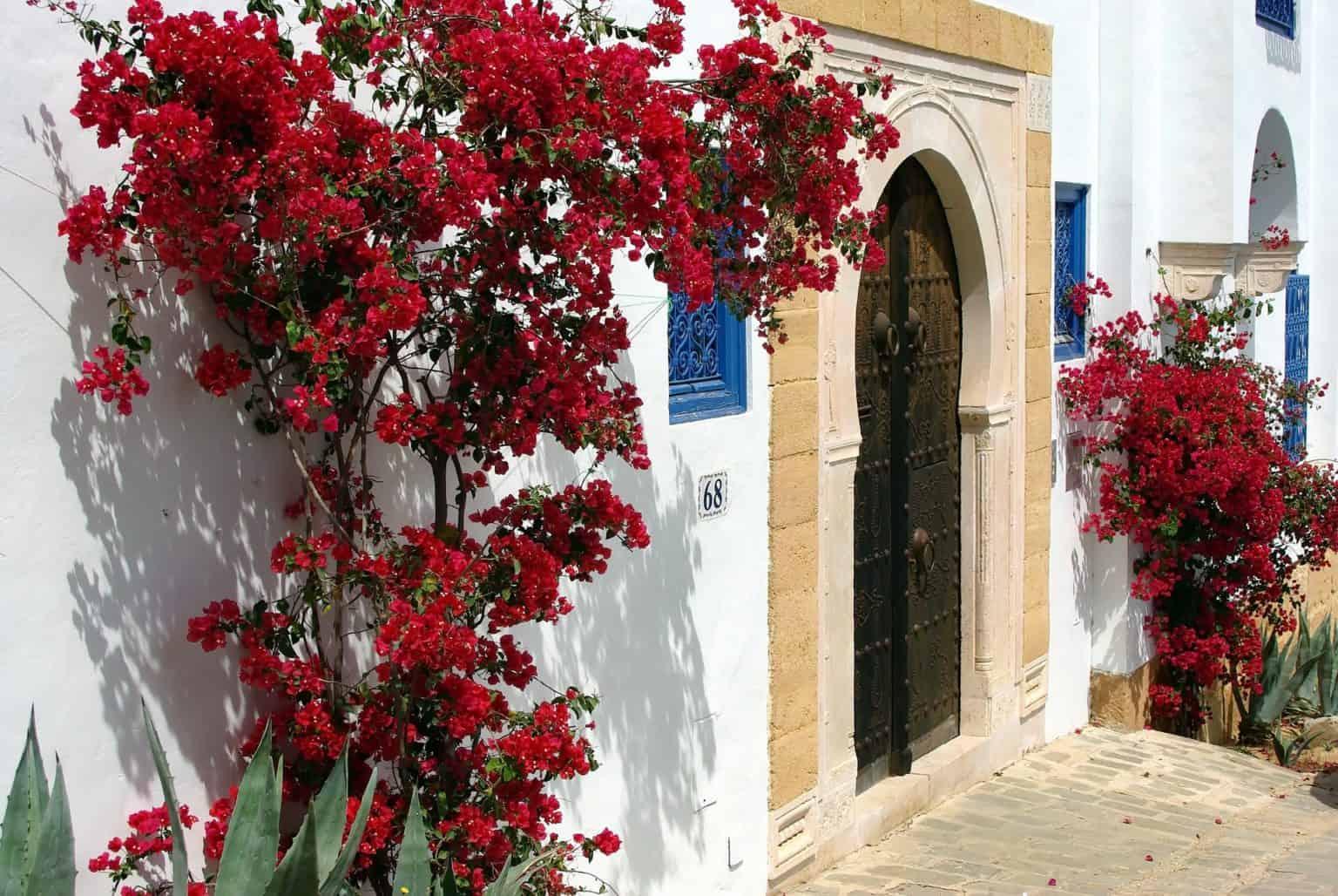 The best of Sidi Bou Said city Walking tour
