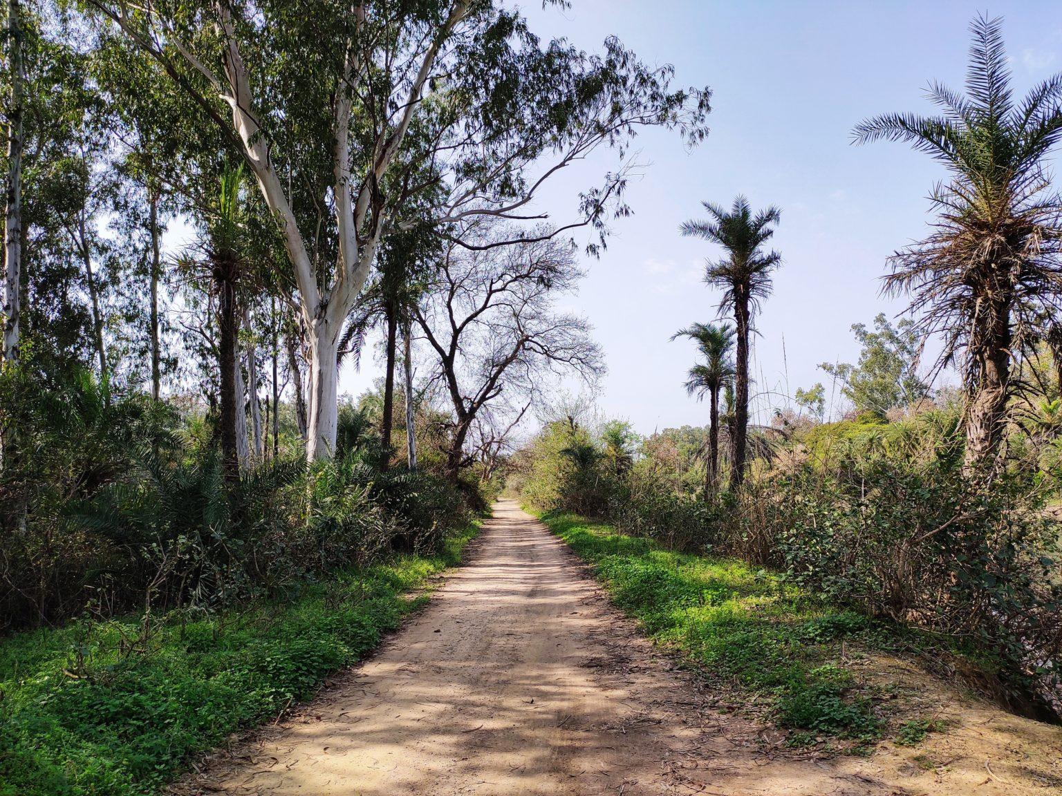 Walking tour in Ludhiana
